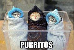 Cats + pun = <3