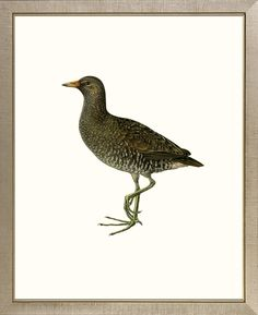 'Bird Studies' Framed Original Painting