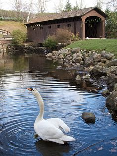 The Swan and The Bridge