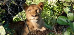Wildlife conservation in South Africa and Swaziland varies greatly as do the approaches by different experts.