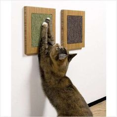 Wall-Mounted Scratching Posts - Bent Plywood Scratcher Saves on Floor Space (GALLERY)