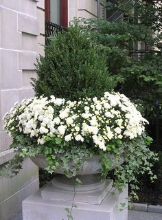 Absolutely stunning composition. I love the idea of keeping the white chrysanthemums in pots, they can be replaced with other flowering white annuals when they finish flowering....large pots like these can be placed in prominent positions throughout the garden.