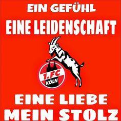 Die 64 Besten Bilder Von 1fc Köln Anniversary Cards Badge Und Badges