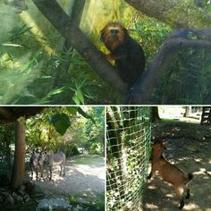 Animals at Mulhouse (Alsace, France) Zoo and Botanical Garden. Loved my day out there. Nature inspires. Animal do, too.