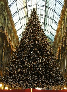 The awesome Christmas tree in the centre of Milan #christmasaroundtheworld