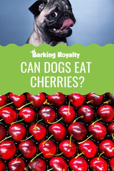 Is Your Dog a Picky Eater? - What You Should Do. >>> Visit image for more details. Pet Puppy, Pet Dogs, Pets, Puppies Tips, Dogs And Puppies, Flea Bath For Dogs, Tumeric For Dogs, Dog Ate Chocolate, Dog Nutrition