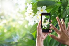 Join us in creating the PlantSnap mobile app! Snap a photo of a plant, flower…