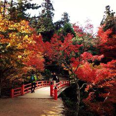行ってよかった!日本の紅葉名所ランキング 2016 | TripAdvisor Gallery