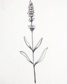 Image result for lavender stalk tattoo