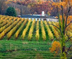 Take a limo on a day tripto three of the best wineries in Long Island NY, Paumonok Vineyards, Macari Vineyards and Martha Clara Vineyards. Monticello Wine Trail, Monticello Virginia, Barboursville Vineyard, Virginia Wineries, Wine Vineyards, Need A Vacation, Wine Country, Day Trips, Maryland