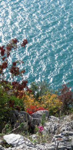 Un fiore nasce d'autunno sul sentiero Rilke - foto tratta dal libro di Mara Bomben IL MARE DI TRIESTE - editore Luglio