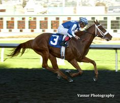 Metaboss (USA) 2012 Ch.c. (Street Boss (USA)-Spinning Yarns (USA) by Free House (USA) 1st El Camino Real Derby (USA-G3,9fA,Golden Gate Fields) (photo: Vassar Photography)