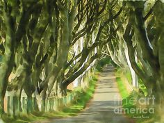 Watercolor drawing of the The Dark Hedges trees in Northern Ireland. Fine Art Drawing, Watercolor Drawing, Large Art, Large Wall Art, Hedge Trees, Monarch Of The Glen, Harbor Lights, Colorful Elephant, Fine Art Prints