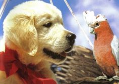 napoleon dog movie pinterest - Google Search
