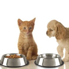 PETMAKER Stainless Steel Pet Bowls with Non Slip Rubber Bottom for Dogs and CatsFeeder Dish for Food and Water Set of 2 16 Oz Each By * Continue to the product at the image link. (This is an affiliate link) Self Adhesive Backsplash, Peel Stick Backsplash, Peel And Stick Tile, Stick On Tiles, Tic Tac Tiles, Smart Tiles, Accent Wall Bedroom, Cat Feeding, Pet Bowls