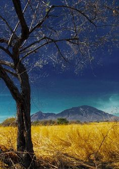 Baluran National Park - East Java, Indonesia