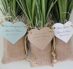 Lily Grass Plant Wedding Favors in Burlap Bags by naturefavors, $124.95