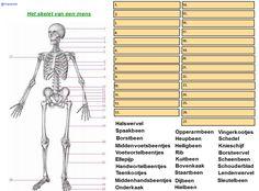 werkblad woordzoeker menselijk lichaam - Google zoeken