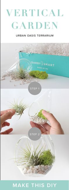 Create your own DIY Terrarium with this project!