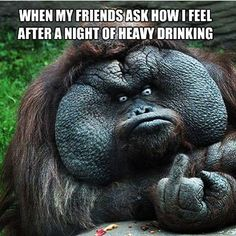 #lol  Who could use a #drink already Tag'em below & #cheers #MondayBlues... . .  TAG SOMEONE WHO SHOULD FOLLOW @drinkapalooza  .  #GetYourDrinkOn  # #liquor #drinkinggames #drinkinggame #instadrink  #instadrunk #haha #drinkdrankdrunk #partytime #drinks # # # ##beerpong #flipcup #tequila  #drinking #booze & #beers #shots etc. #cheerstobeers  #drink #drinkdrankdrunk