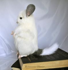 Chinchilla Plush Toy Handmade Mohair Stuffed Toy 20 by JuliaBerg, $110.00