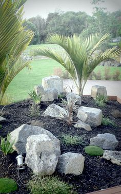 Chatham Is Nikau underplanted with mainly NZ natives. Designed and implemented b… - tropical garden ideas Boxwood Landscaping, Tropical Landscaping, Landscaping With Rocks, Modern Landscaping, Tropical Garden, Front Yard Landscaping, Landscaping Design, Landscaping Software, Tropical Plants