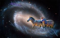 """Zebra in Spiral Nebula   Contact: Marv Lyons - 619.691.8776  lyons@visionsynthesis.net 47"""" x 35"""" print on fine watercolor paper or canvas $755 • Shipping Extra"""