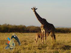 loup safari