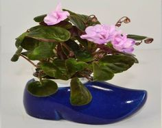What Are The Best Type Of Pots For African Violets? - Baby Violets Ceramic Pots, Clay Pots, Self Watering Pots, Violet Plant, African Violet, Plastic Pots, How To Look Pretty, Shrubs, Planters