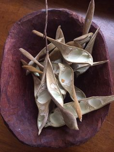 Wisteria pods. @silk And Willow
