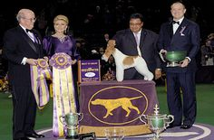 "The Westminster Kennel Club Dog Show's 2014 Best In Show Trophy was awarded a Wire Fox Terrier named  ""GCH Afterall Painting The Sky,"" better known as Sky."