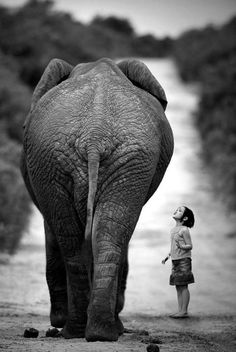 Awed by his power I was, and unsure of what he would do.  But when I first touched him, a thrill went through me like nothing I've ever felt.  I was but five when I first met my best friend Shkerya.  An odd name, you say?  Not for an elephant.