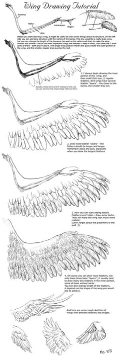 bird's wing drawing - Google Search