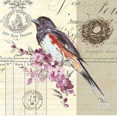 Art Print: Bird Sketch 3 by Chad Barrett : Decoupage Vintage, Decoupage Paper, Vintage Paper, Images Vintage, Vintage Birds, Vintage Prints, Illustrations, Illustration Art, Chad Barrett