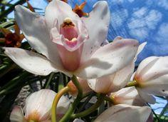 orquídeas, por que sois tão belas?