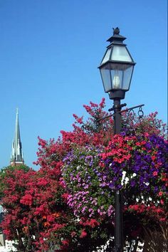 City Dock Hanging baskets by Dougs World, via Flickr