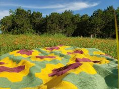 """I've been waiting for the opportunity to take these pictures for years …When we first moved to Texas more than a decade ago, I was inspired by seeing the Indian Summer Blanket wild flowers in this little field. A real blanket like this would be awesome … """"I want to make this!"""" Texas Weather, Moving To Texas, Dream Come True, Indian Summer, Never Give Up, Wild Flowers, Opportunity, Turtle, Waiting"""