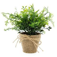 Right Bedside corner under Closet-MBed -$16.99 Green Mixed Herbs in Burlap