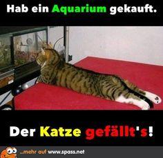 Aquarium | Lustige Bilder auf Spass.net