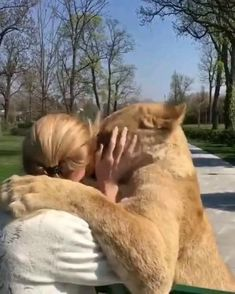 Cute Wild Animals, Cute Funny Animals, Animals Beautiful, Animals And Pets, Cute Cats, Funny Cats, Cute Animal Videos, Cute Animal Pictures, Pet Lion