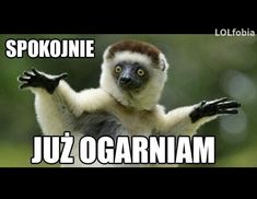 hahahahaha xD na Takie tam. Weekend Humor, Wtf Funny, Reaction Pictures, Panda Bear, I Laughed, Haha, Thoughts, Animals, Sassy