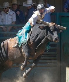 """After Brett Stall competed in the Rapid City, S.D., PRCA Xtreme Bulls Tour event in January, he was pretty sure he'd be seeing the lights of Las Vegas in December. And he was right.  Read the full article """"DL man headed to rodeo finals"""""""