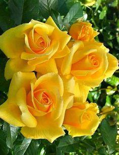 Captivating Why Rose Gardening Is So Addictive Ideas. Stupefying Why Rose Gardening Is So Addictive Ideas. Bloom, My Flower, Pretty Flowers, Flower Crown, Dahlia Flower, Cactus Flower, Exotic Flowers, Rosa Rose, Hybrid Tea Roses