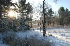 Still Cold by Eunice Miller  After a foot of snowed covered this New England landscape my wish was for some warmth from the sun but sadly it was STILL COLD!