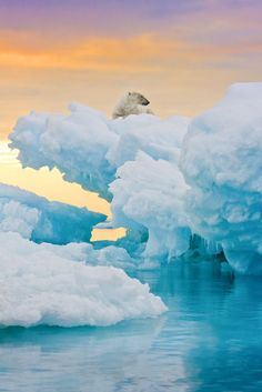 """""""Real ice, real sky and, most importantly, a real wild polar bear""""  by abeyeler"""