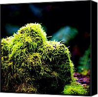 Mossisnice Canvas Prints - Moss Muppet. #instagood #picoftheday Canvas Print by Kevin Smith