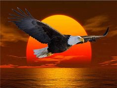 American Bald Eagle Flying at a Glorious Sunset. Eagle Images, Eagle Pictures, Cool Pictures, The Eagles, Bald Eagles, Animals And Pets, Cute Animals, Eagle Drawing, Eagle Wallpaper