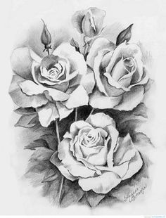 how-to-draw-a-beautiful-rose-1000-images-about-sketching-drawing-amp-painting-on-pinterest.jpg (779×1024)