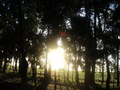 #Sunset #Atardecer #Campo #Paz Mar del Plata