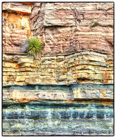 Layers and a Yucca by Zena Woron-Quinn Rocks And Gems, Rocks And Minerals, Mother Earth, Mother Nature, Cool Rocks, Rock Formations, Natural Wonders, Natural World, Amazing Nature
